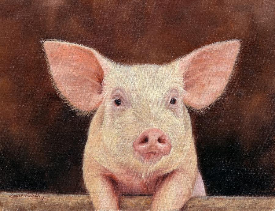 1-pig-david-stribbling