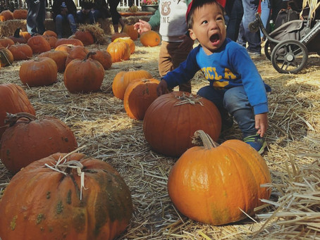 Pumpkin Patch 2020 is Here!