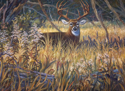 Buck at Rest