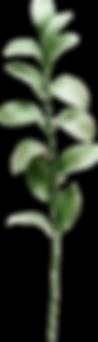 leaf1.png