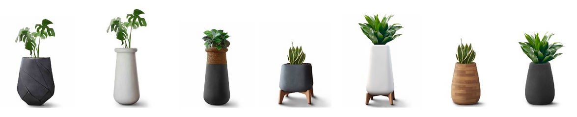 Concrete and wood or cork planters suitable for indoors and outdoors available in Spain France and Belgium