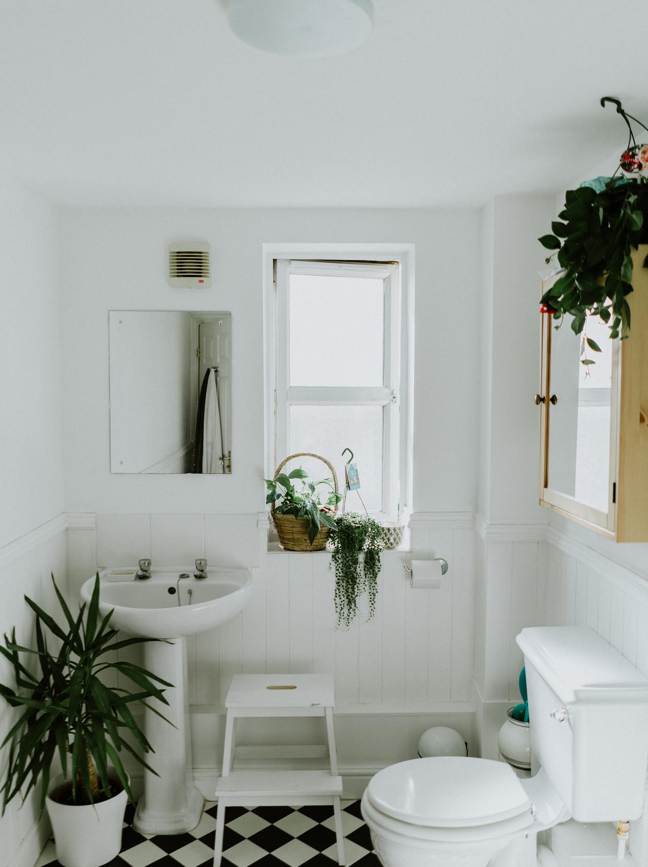 Baño con plantas decorativas para hacerlo elegante y sostenible con matas y verde. Formas de hacer tu baño más sostenible, ahorrar agua y limpio.