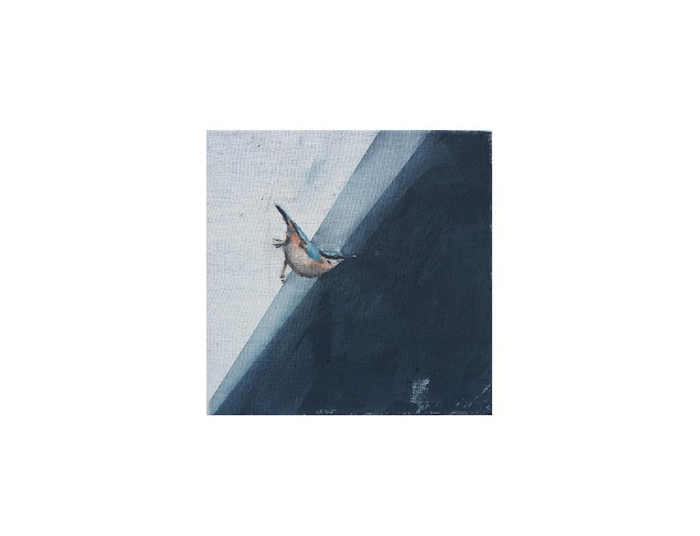 Kleiber_nuthetch, 2012, 30 x 30 cm