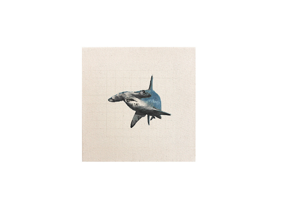 Hammerhai_hammerhead shark, 2010, 30 x 30 cm