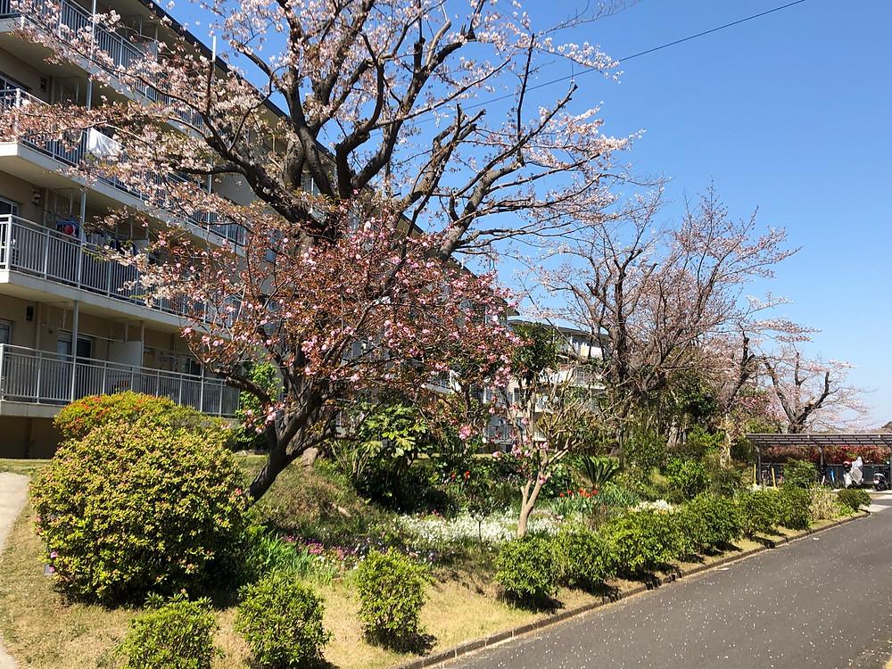 竹山団地16-2ブロックの写真。