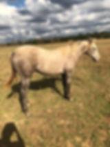 Dolly Website Pics 1.24.20.JPG