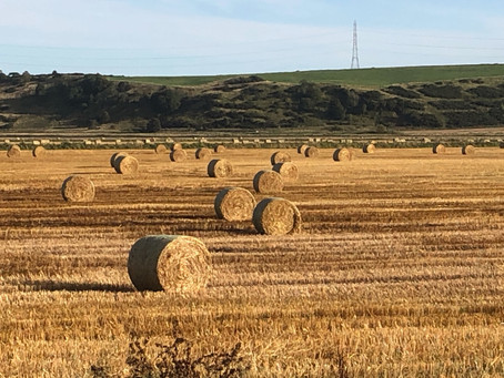 Everything You Need To Know About Hay Production in Australia