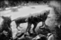 Hyena-14.jpg