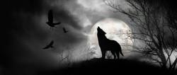 black wolf books 33