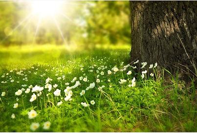 natura-alberi-benessere-corpo-mente.jpg_