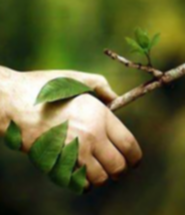 Hand Shaking Branch 1.png 2015-12-21-4:3