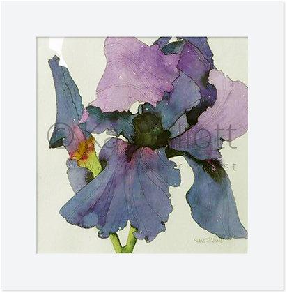 Bearded Iris - Original Painting