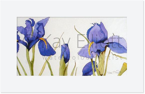 Bright Blue Iris - Original Painting