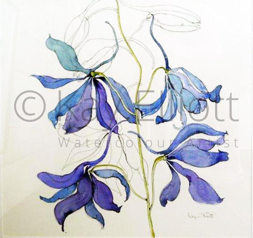 Delicate Delphinium