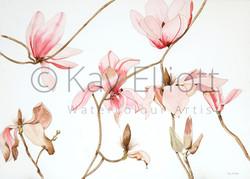 Elegant Magnolia