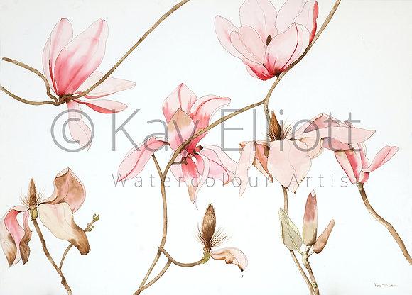 Elegant Magnolia - Print