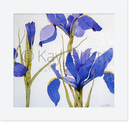 Bright Blue Iris - Original Painting