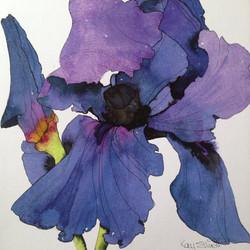 NEW* Purple Iris
