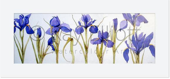Bright Blue Iris Garden - Original Painting