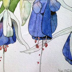 NEW* Fuchsia