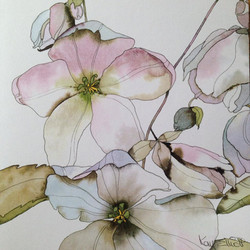 NEW* Pale Hellebores