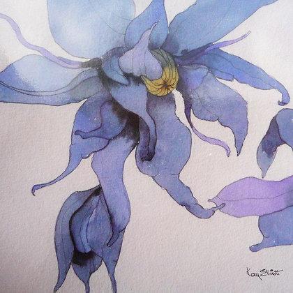 Fairy Clematis
