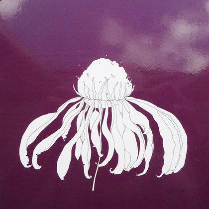 Enchinacea