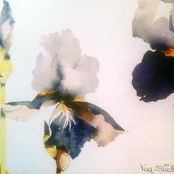 NEW* Blue Iris