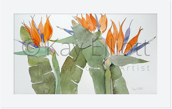 Strelitzia, Birds of Paradise - Original Painting