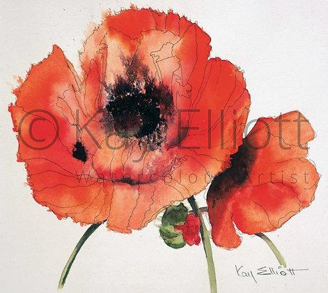 Red Oriental Poppy - Print