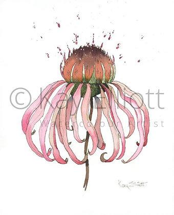 Single Echinacea - Print