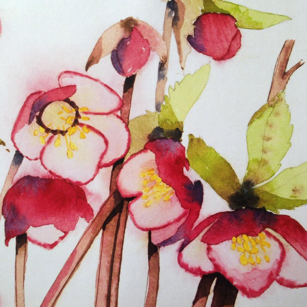 NEW* Early Spring Hellebores
