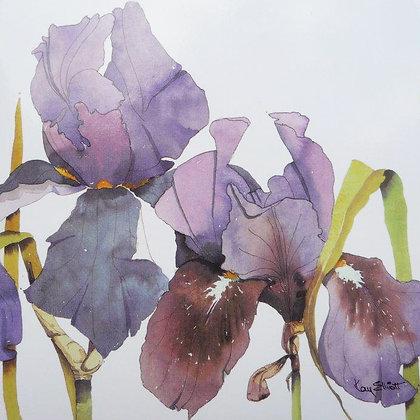 Blue Iris Garden