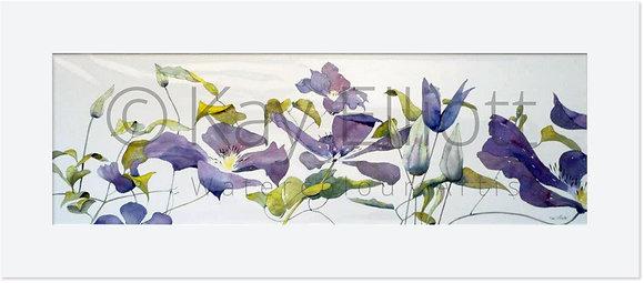 Trailing Purple Clematis - Original Painting