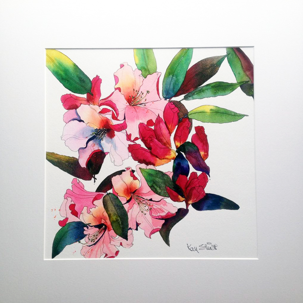 NEW* Rhododendron