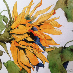 NEW* Sunflower