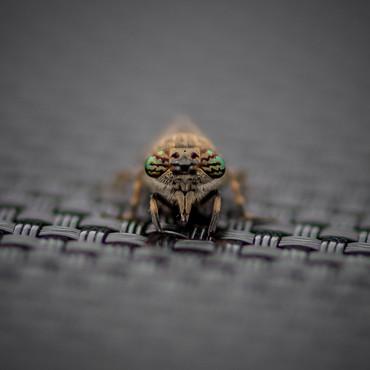 2019RFNHM_PDI_047 - Evil Eyes by Steven Ferguson.
