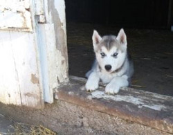 Puppies5_edited