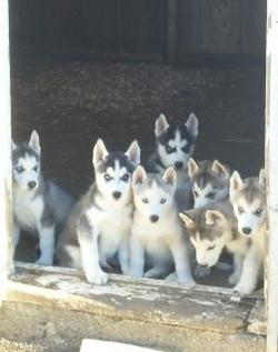 Puppies3_edited