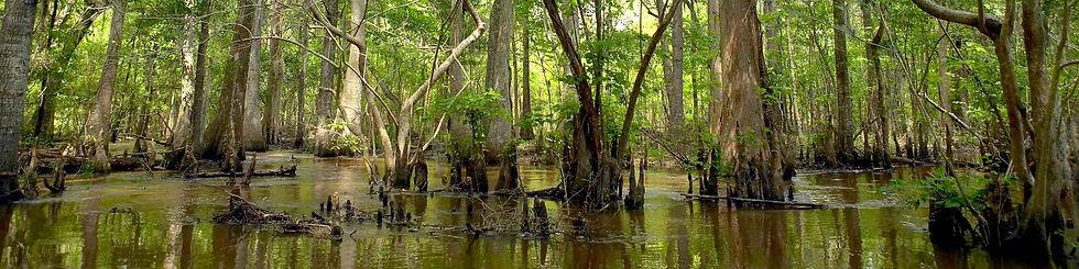 altamaha-river-swamp-2400wd.jpg