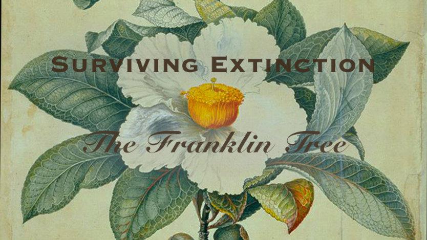 Franklinia Cover image B.jpg