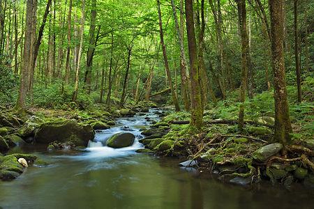 Avery Creek.jpg