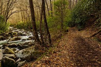 bigstock-Big-Creek-Trail-In-Great-Smoky-