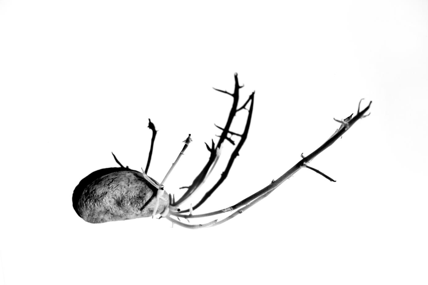 RhinoMinus.tif