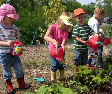 5 Steps to Starting a School Garden