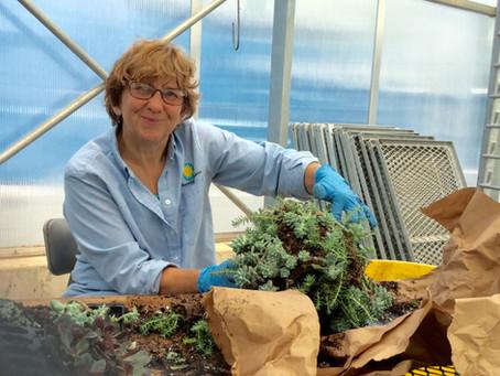 Janet Draper: A People PlantsPerson