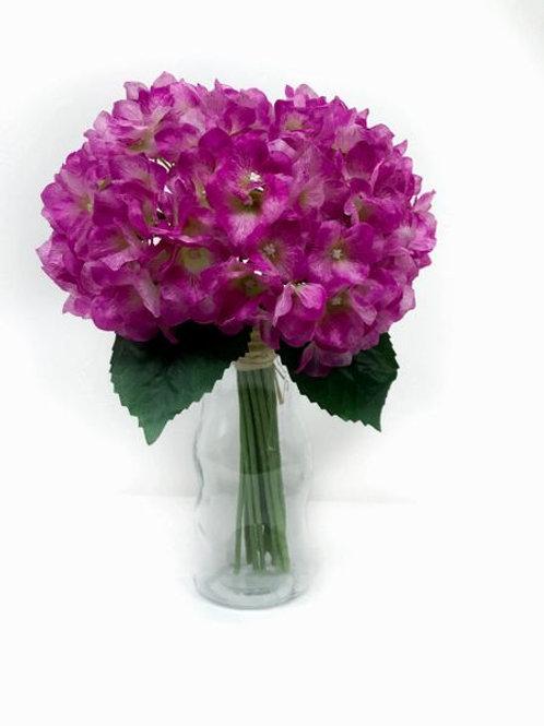 Gloquets-Hydrangeas