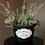 Thumbnail: Fleur d'etain