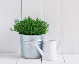 TIPS PARA CUIDAR TUS PLANTAS, ¡Y NO REGARLA!