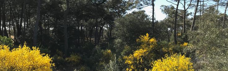 forêt domaniale du Flamand